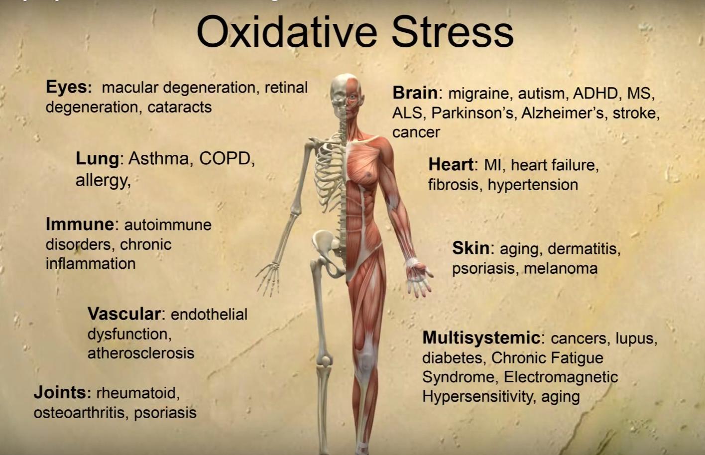 oxidsative stress